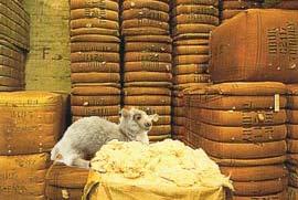 La laine du mouton